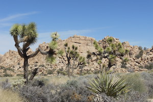 Guided Rock Climbing at Joshua Tree, CA