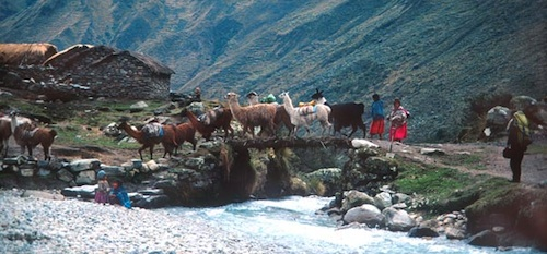 Local villagers with alpacas entering Aymara village.